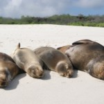 Sea lions in the Galapagos.